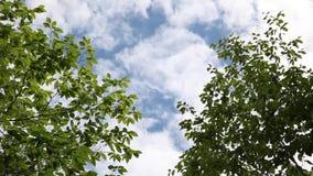 Cielo azul y árboles metrajes
