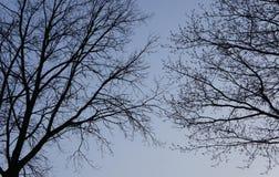 Cielo azul y árboles Fotos de archivo