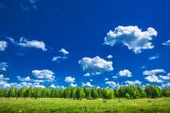 Cielo azul y arboleda joven del abedul fotos de archivo