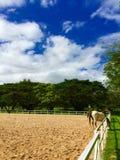 Cielo azul y caballo imagen de archivo