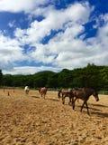 Cielo azul y caballo fotos de archivo