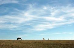 Cielo azul y caballos fotos de archivo