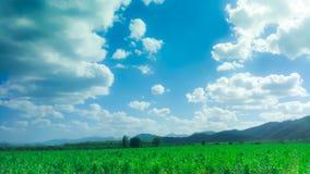 Cielo azul y campo Fotografía de archivo