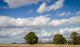 Cielo azul y nubes y los árboles Imagen de archivo