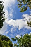 Cielo azul y nubes y verdor. Foto de archivo libre de regalías