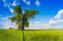 Cielo azul y prado del árbol grande Imágenes de archivo libres de regalías