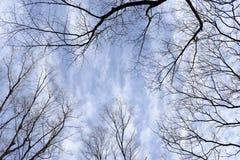 Cielo azul y rama Imagen de archivo libre de regalías