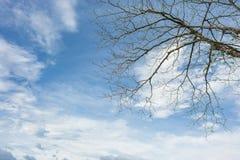 Cielo azul y rama Fotografía de archivo libre de regalías