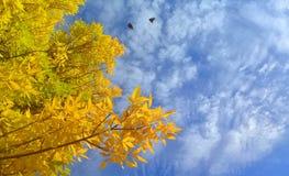 cielo azul y un árbol con las hojas amarillas imagen de archivo