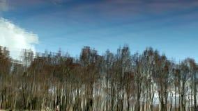Cielo azul y una reflexión del bosque de la primavera en el río metrajes