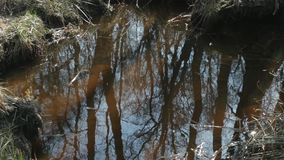 Cielo azul y una reflexión del bosque de la primavera en el río almacen de video