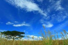 Cielo blu, albero ed erbe Fotografie Stock