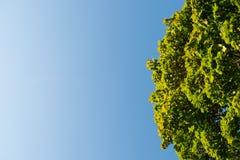 Cielo blu con gli alberi Immagini Stock