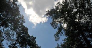 Cielo blu con gli alberi e le nuvole fotografia stock libera da diritti