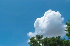 Cielo blu con grande nuvoloso bianco e l'albero su priorità alta Fotografia Stock Libera da Diritti