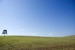Cielo blu con l'albero Fotografie Stock Libere da Diritti