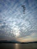 Cielo blu con l'uccello nel reticolo Fotografia Stock Libera da Diritti