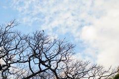 Cielo blu con la siluetta di un albero fotografia stock
