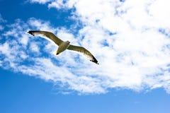 Cielo blu con le nuvole ed il gabbiano bianchi di volo Fotografia Stock