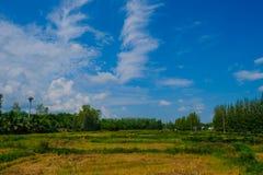 Cielo blu con spazio verde Fotografia Stock