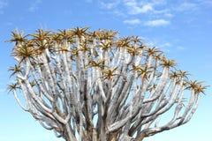 Cielo blu dei rami di albero del fremito, Namibia Immagine Stock