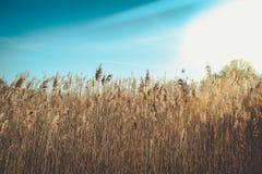 Cielo blu del anad dell'erba selvatica fotografia stock libera da diritti