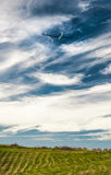 Cielo blu dell'aliante Fotografia Stock