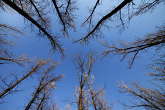 cielo blu della foresta di autunno Immagini Stock Libere da Diritti