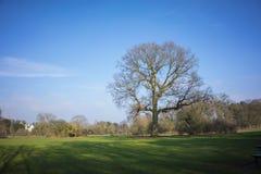 Cielo blu della regolazione del parco Fotografie Stock