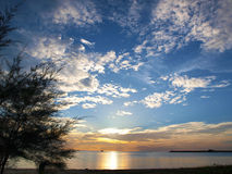 Cielo blu della siluetta dell'albero Fotografie Stock