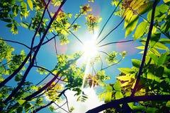 Cielo blu delle foglie verdi Immagini Stock Libere da Diritti