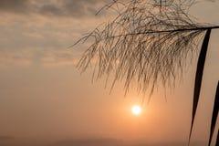 Cielo blu di alba, di bellezza del fiore della canna da zucchero e nuvole Immagini Stock