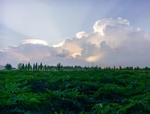 Cielo blu di scena del paesaggio della natura di Prajinburi Tailandia e strada urbana al tatto naturale fresco ed attraente viagg Fotografie Stock Libere da Diritti