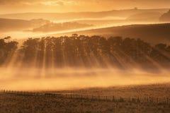 Cielo blu di scena di stordimento chiaro con il sole verde del pascolo di mattina Agricoltura della Nuova Zelanda nella zona rura immagini stock