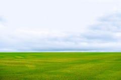 Cielo blu di struttura dell'erba verde Fotografia Stock