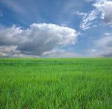 cielo blu di verde di erba Fotografia Stock