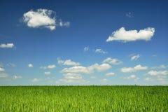 Cielo blu e campo verde fotografie stock