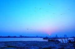 Cielo blu e cervi volanti Fotografie Stock Libere da Diritti