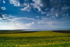 Cielo blu e lago nel campo giallo Fotografia Stock