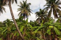Cielo blu e nuvole bianche attraverso le palme verdi Fotografia Stock Libera da Diritti