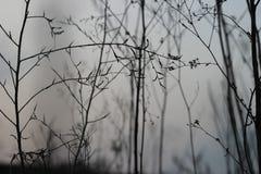 Cielo blu e ramoscelli fragili fotografia stock