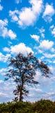 Cielo blu e una siluetta dell'albero Immagini Stock Libere da Diritti