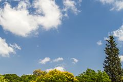 Cielo blu ed alberi Immagine Stock Libera da Diritti