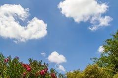 Cielo blu ed alberi Fotografie Stock Libere da Diritti