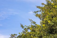 Cielo blu ed albero verde Fotografia Stock Libera da Diritti