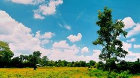 Cielo blu ed albero verde Immagini Stock Libere da Diritti