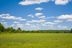 Cielo blu ed erba verde Fotografia Stock Libera da Diritti