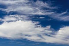 Cielo blu ed uccello Fotografia Stock