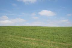Cielo blu, erba verde, nuvole bianche fotografia stock libera da diritti