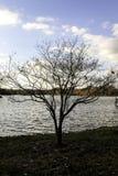 Cielo blu fuori dalla riva del lago Fotografia Stock
